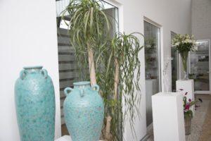 piante e vasi